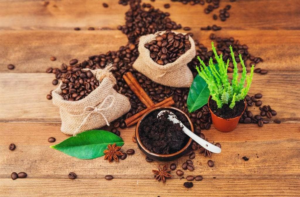 bón cây bằng bã cafe