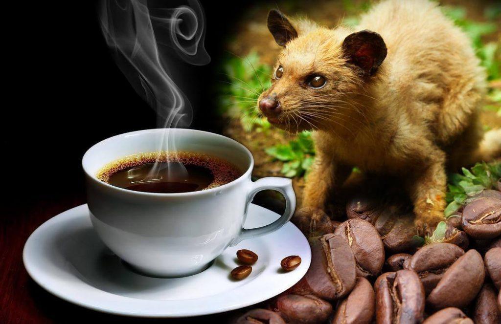 Kopi Luwak cafe